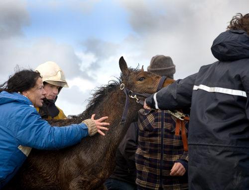 Reddingsactie paarden